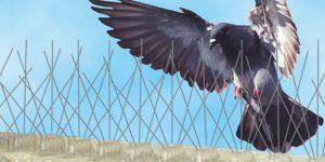 Pigeon Removal Phoenix